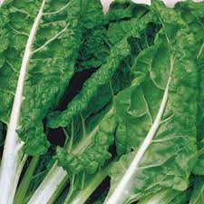 SWISS CHARD - GREEN - 4 plants per box - Springbank Greenhouses