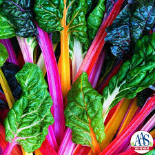 SWISS CHARD - BRIGHT LIGHTS - 4 plants per box - Springbank Greenhouses