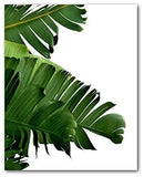 Monstera, Set Of 4 Tropical Prints - zedhouses