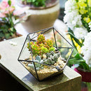 Modern Handmade Triangular Half Ball Glass Geometric Terrarium Balcony Bowl Shape Flower Pot - zedhouses