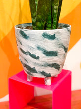 Load image into Gallery viewer, Sanseveria Laurentii (Snake Plant) in Teal Brush Stroke Planter