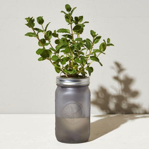 Self-Watering Indoor Garden Jar - Mint