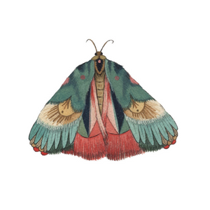 Collector: Moth 7 Print - 5x7
