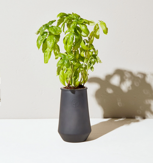 Tapered Tumbler Indoor Garden - Basil