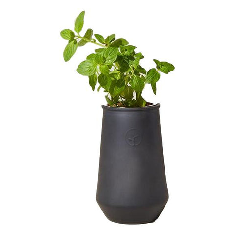 Mint Grow Planter Kit