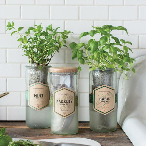 Self Watering Herb Planter