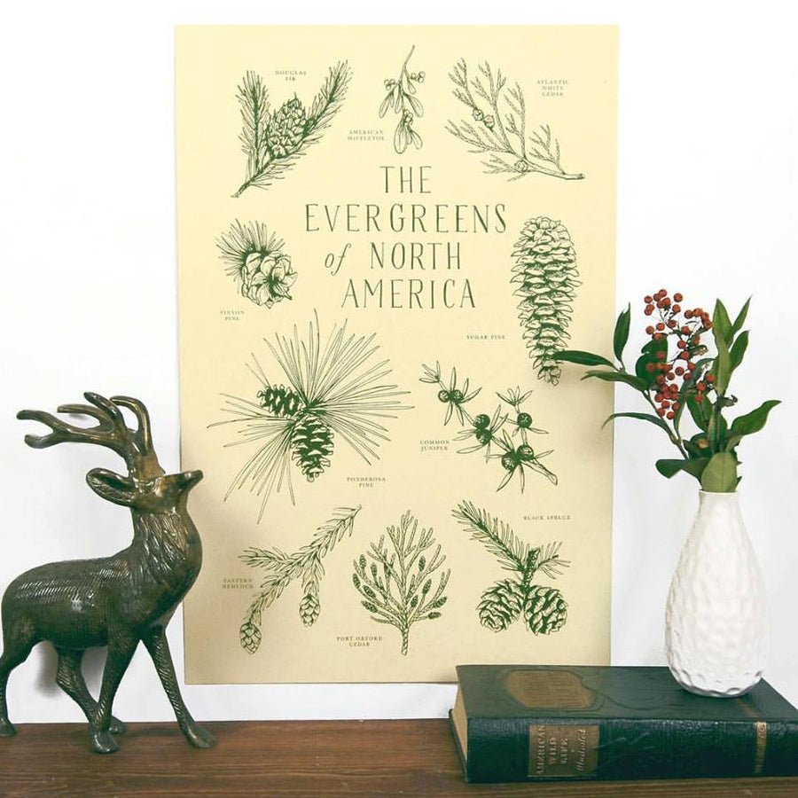 Evergreens of Noth America Print - 11 x 17