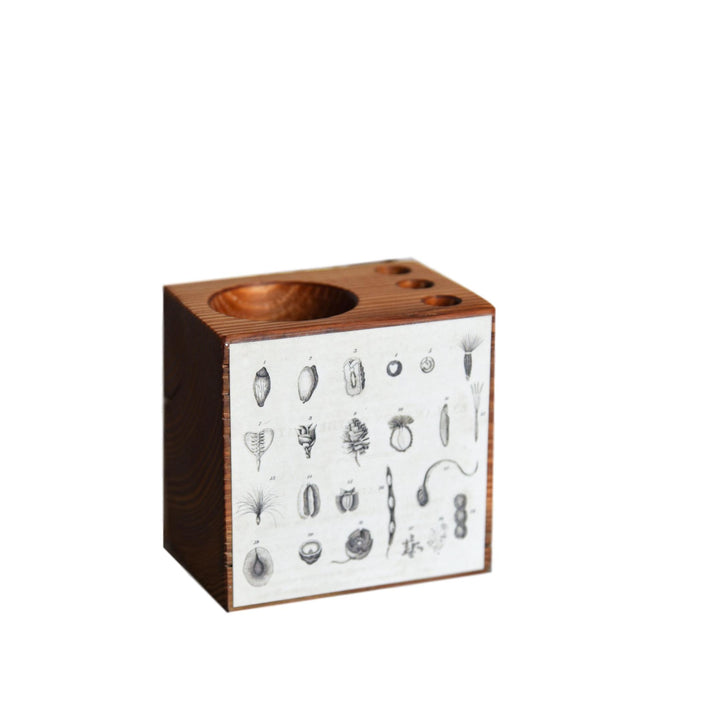 Seeds Botanical Desk Caddy