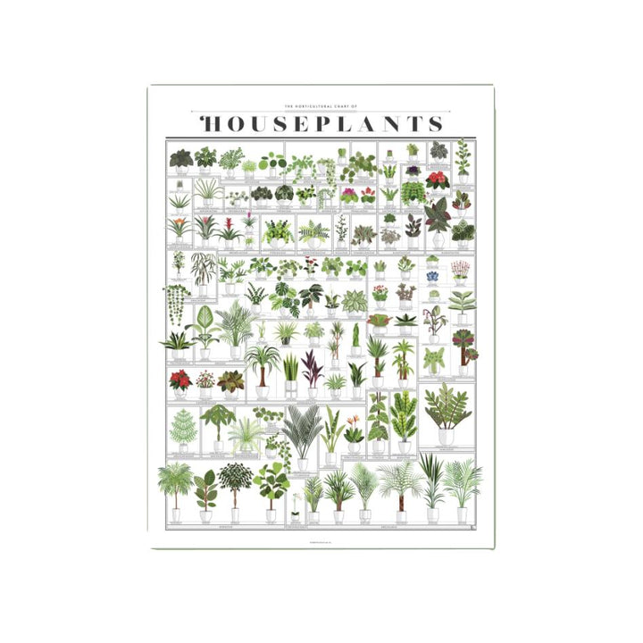 The Horticultural Chart of Houseplants - 16 x 20 PICKUP ONLY