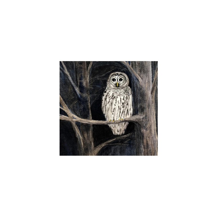Tiny Framed 4x4 Print - Barred Owl