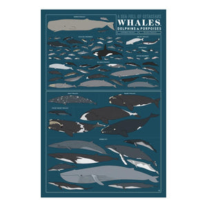 PICKUP ONLY Whales Art Print - 36 x 24