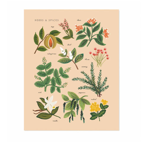 Herbs and Spices Print - Peach