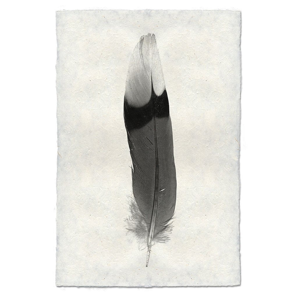 Archival Feather Study #9 Handmade Paper Print