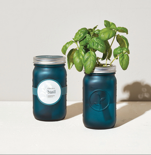 Self-Watering Indoor Garden Jar - Basil