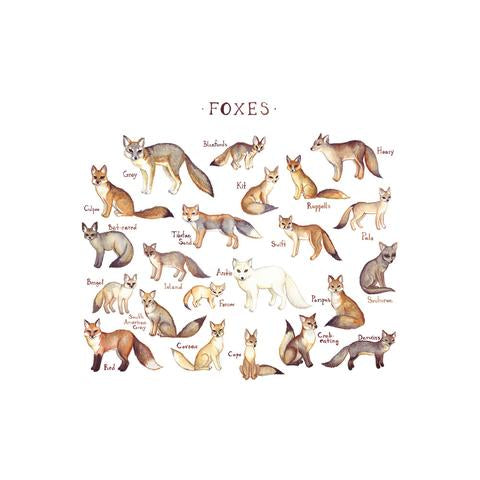 Foxes of the World Print