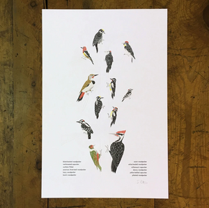 A Few Woodpeckers Letterpress Print - 12x18