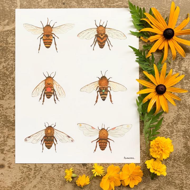 Botanical: The Bees Print - 8 x 10