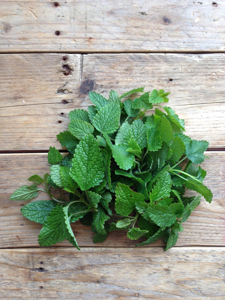 Quedlinburger Niederliegende Lemon Balm Seeds