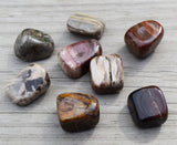 Petrified Wood Grounding Stone Helps You Connect with Tree & Nature Spirits