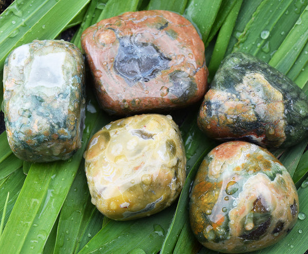 RAINFOREST JASPER Earth Healing Stone - Connect With Mother Earth Plants Animals Tree Spirits