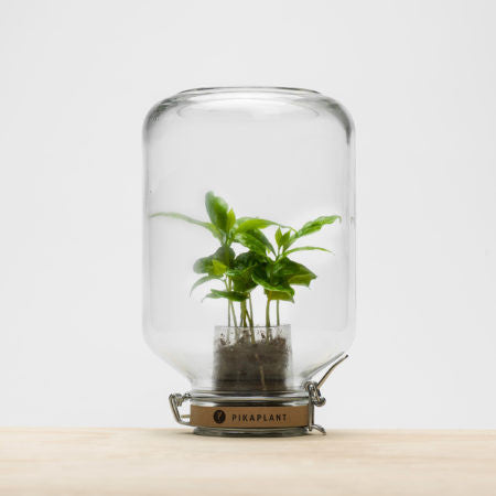 PIKAPLANT Jar - Plantkeeping made easy!