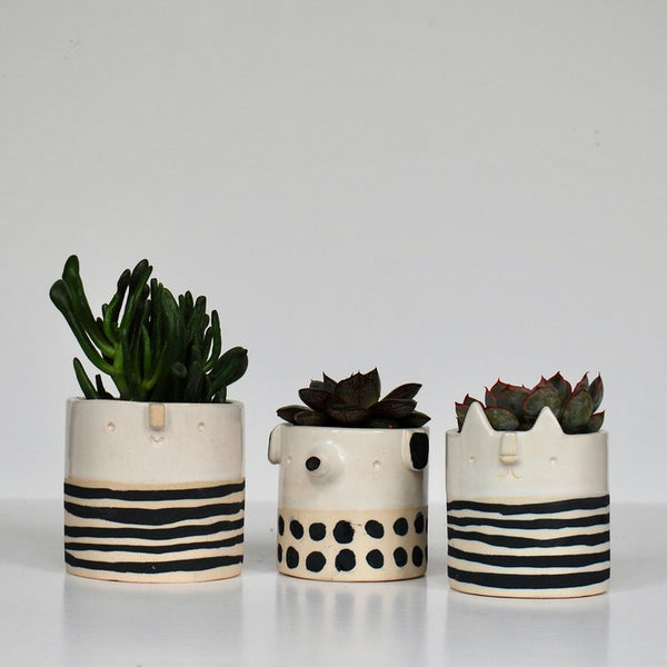 Mini Spotted Dog Pot