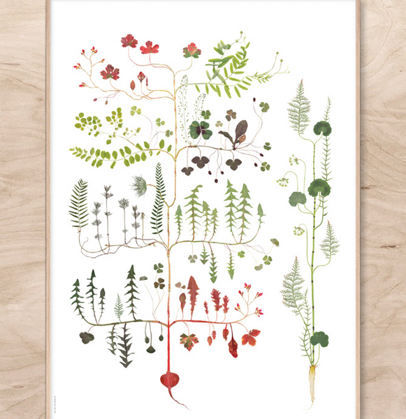 Lottas Trees - Forest Tree print
