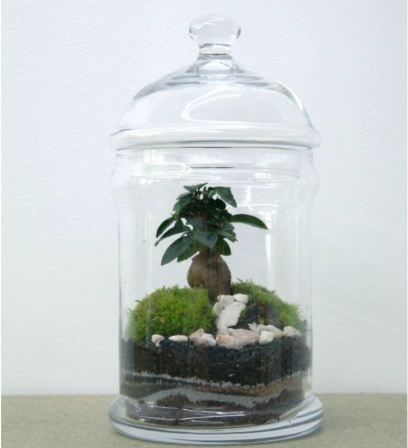 Green Factory Dome Ficus