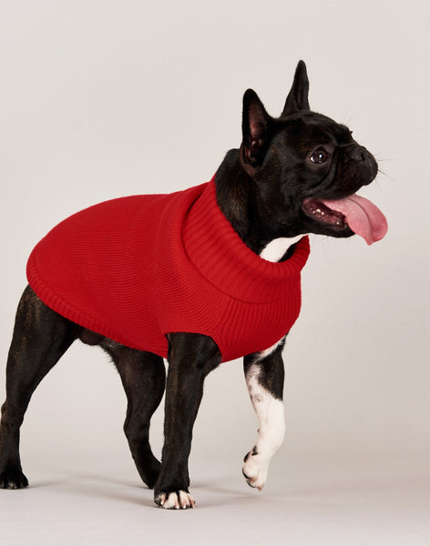 Dog Jumper - Rudolph Red
