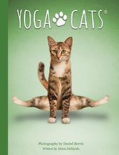 Load image into Gallery viewer, Yoga Cats Deck & Book Set