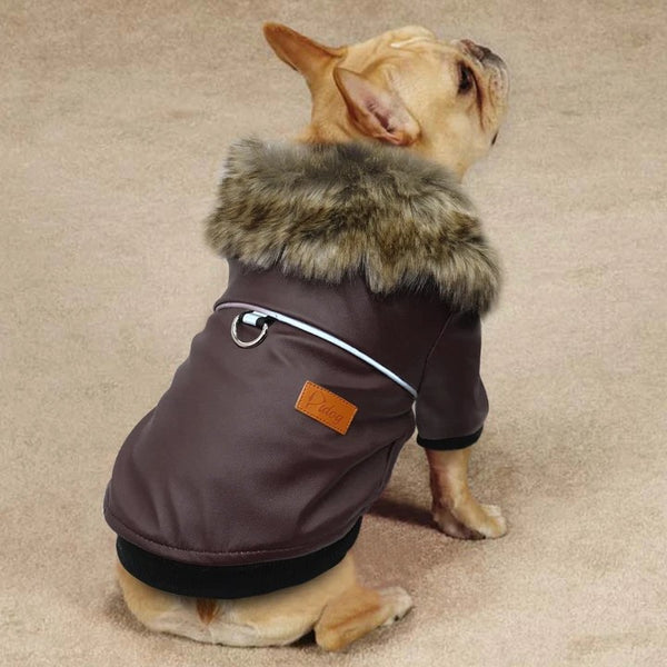 Awesome Jacket for Dogs - Puppy Model Image(Color Brown) - Waterproof Windproof Winter Leather Puppy Jacket Coat with Faux Fur Collar | Attapet.com