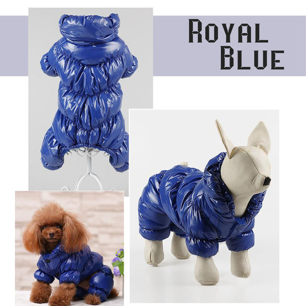 Model Display(Color Royal Blue) - Reflective Solid Color Pet's Down Jacket With Buttons | Attapet.com