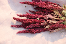 Afbeelding in Gallery-weergave laden, AMARANTHUS RED