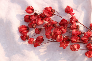 BOUGAINVILLE RED