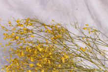Afbeelding in Gallery-weergave laden, GYPSOPHILIA YELLOW