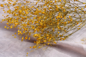 GYPSOPHILIA YELLOW