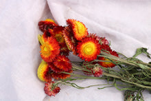 Afbeelding in Gallery-weergave laden, HELICHRYSUM RED