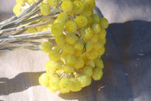 Afbeelding in Gallery-weergave laden, IMMORTELLE YELLOW