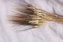 Afbeelding in Gallery-weergave laden, TRITICUM BLACK WISPS
