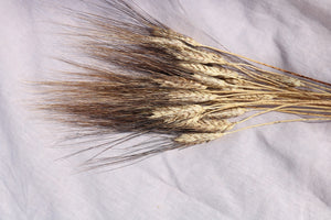 TRITICUM BLACK WISPS