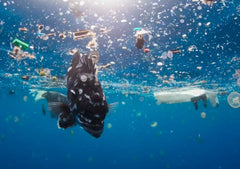 Tropical Fish swims through a mix of floating plastic waste pollution