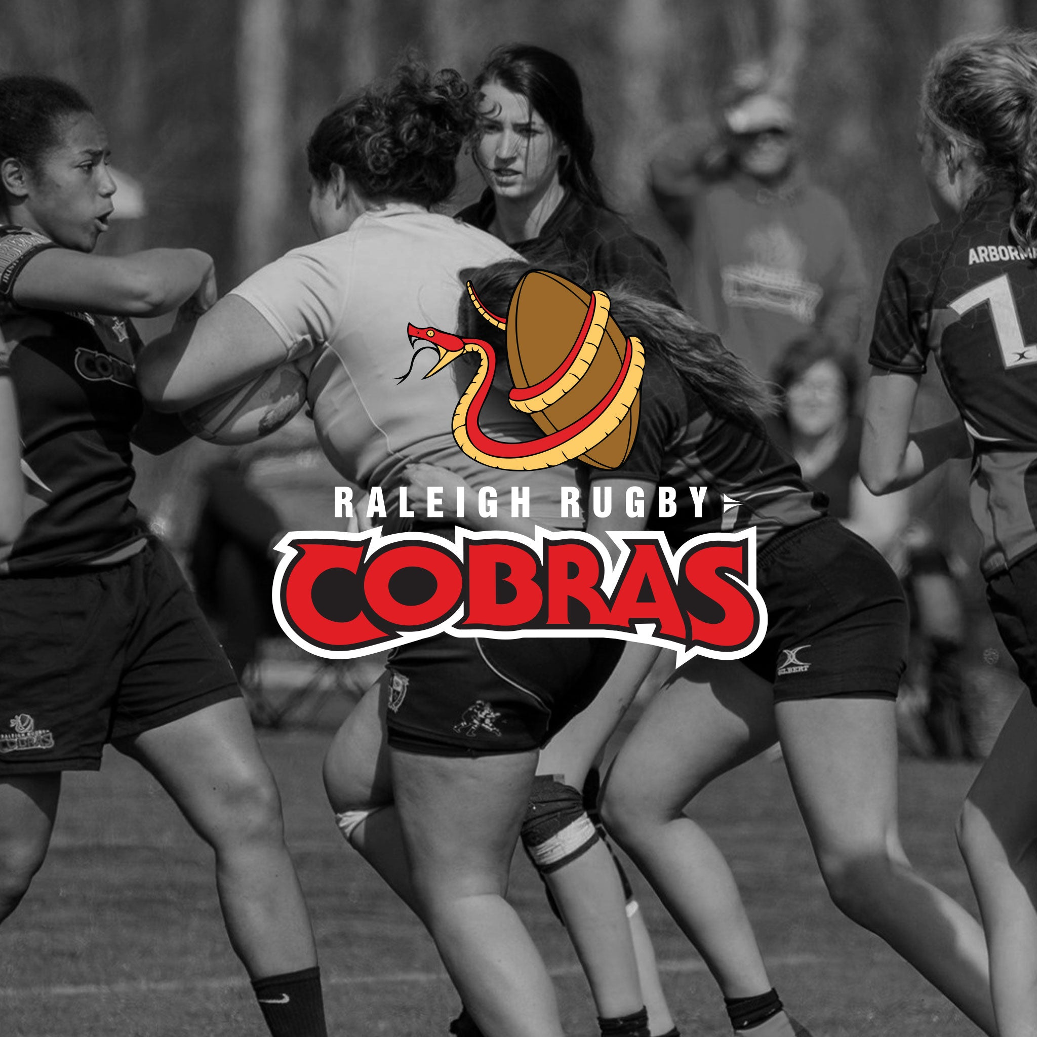 Raleigh Rugby Cobras World Rugby Shop