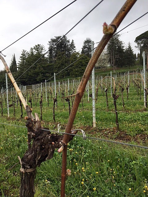 WHAT'S UP IN THE VINEYARD: SPRING EDITION