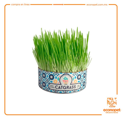 Cat Grass - Pasto de Trigo para Gatos