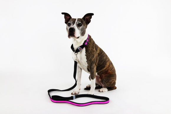 USB Rechargeable LED Dog Leash [2 colors]