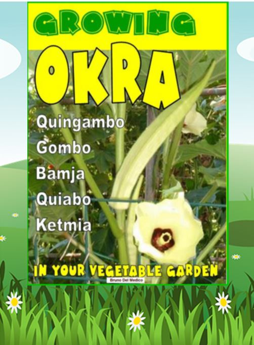 Growing Okra in your vegetable garden. Also called Gombo, Bamja, Quiabo, Ketmia, Quingambo