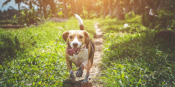 Is shock collar safe for dogs?