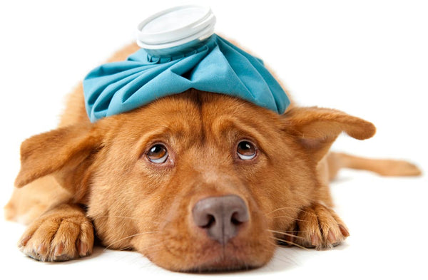7 Natural Remedies for Your Dogs