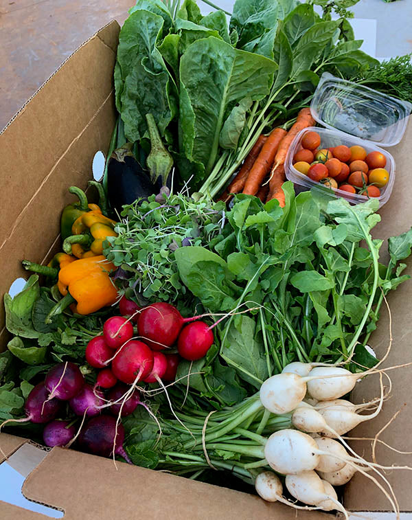 Donate A Farmbox