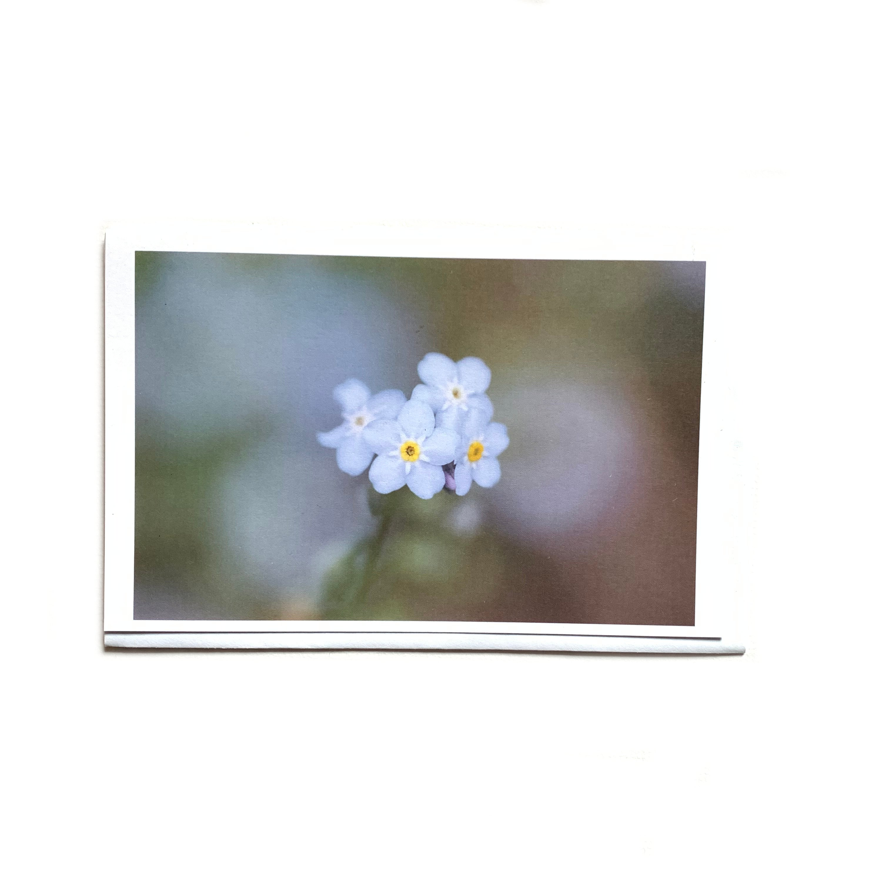 Canadian photography art card of forget me not flower.
